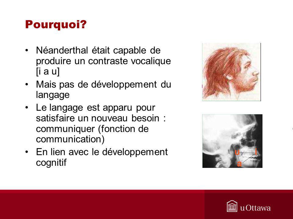 Pourquoi Néanderthal était capable de produire un contraste vocalique [i a u] Mais pas de développement du langage.
